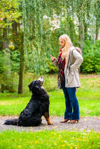 Girl in autumn park training her dog in obedience