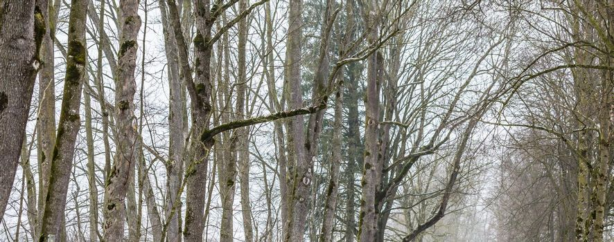 Trees without leaves in barren winter landscape