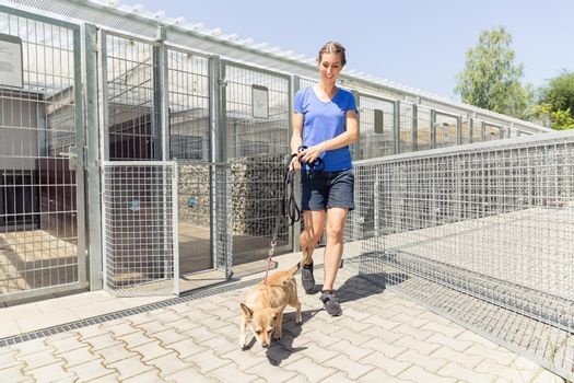 Woman walking a dog in animal shelter