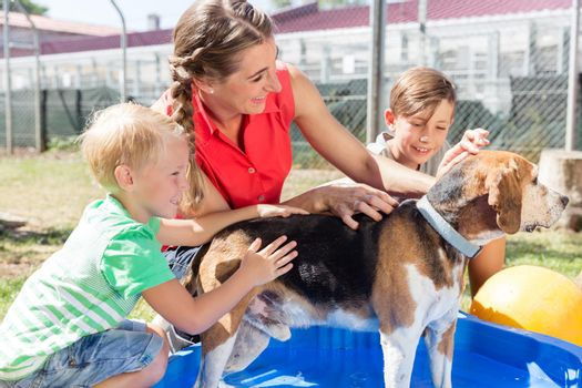 Family washing dog in pool of animal shelter