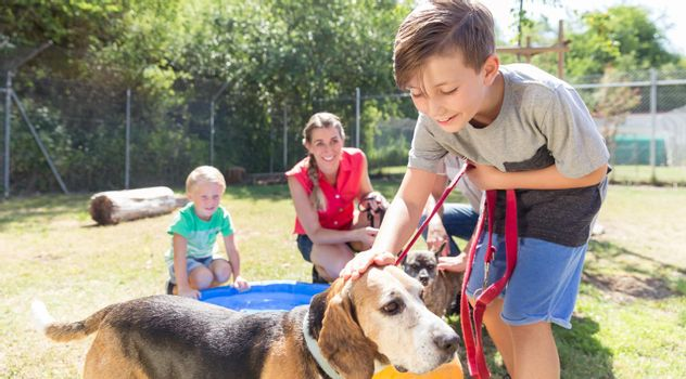 Young boy petting dog in animal shelter