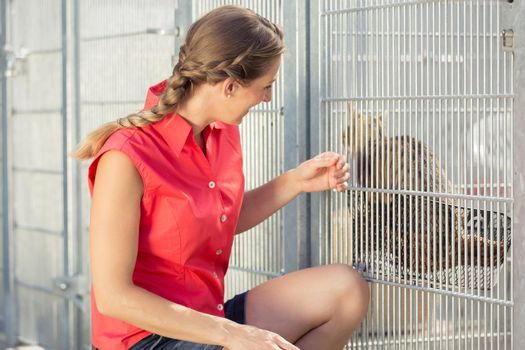 Zookeeper playing with cat in animal shelter