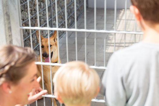 Family looking to adopt a pet from animal shelter