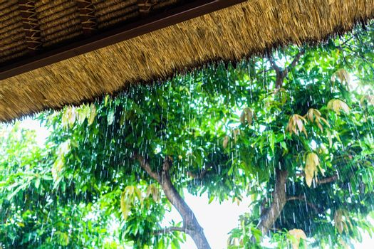 Tropical rain on straw roof as seen from shelter