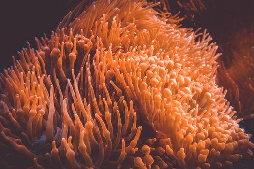 Sea anemone in ocean