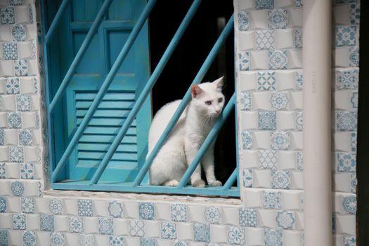 domestic cat in residence window