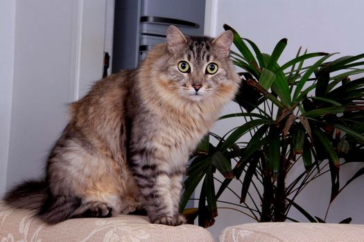 cat pet in residence