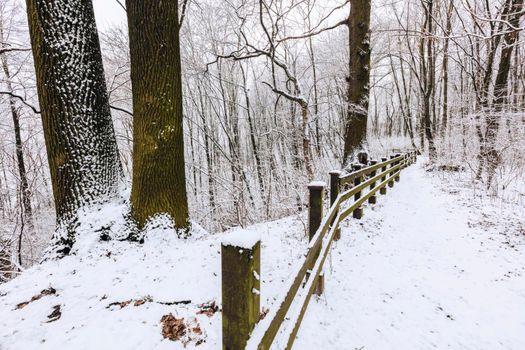 Lisia Gora Preserve