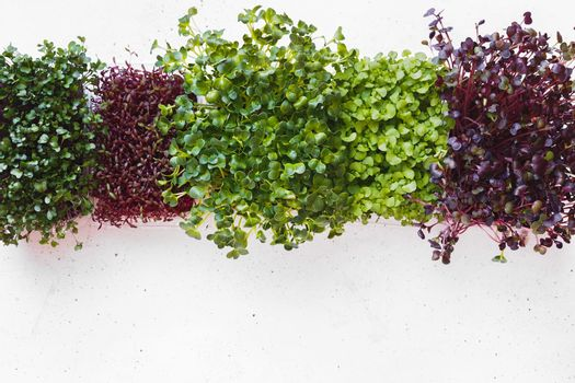 Sprouting Seeds In Box For Garden And Salad. Microgreens. Green superfoods. Seed germination at home.