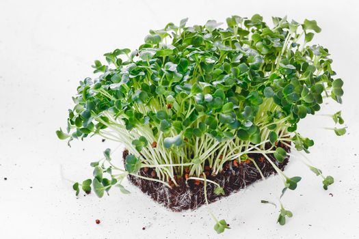 Daikon Radish Sprouting Seeds. Green superfoods. Seed germination at home. Herb and vegetable seedlings