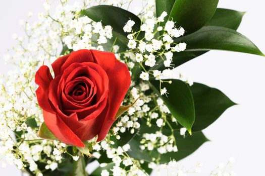 Red Rose with Baby's Breath