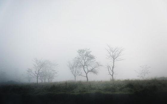Trees in the fog, winter season, moody atmosphere