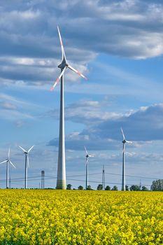 Wind turbines in a flowering canola field