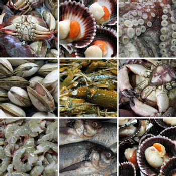 Sea food and sea animals collection