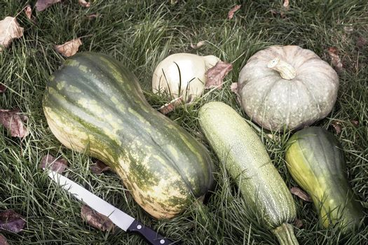 Different varieties of pumpkin on the field