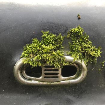 Moss growing on the hood of an black oldtimer