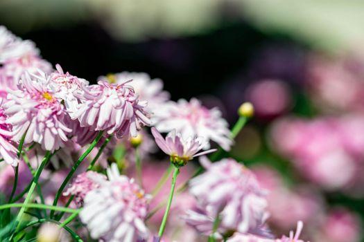 horizontal full lenght closeup shot of pinkish purple flowers background