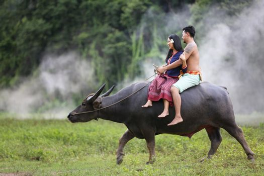 Couple Thai farmers family happiness time riding on buffalo on the field, Thailand