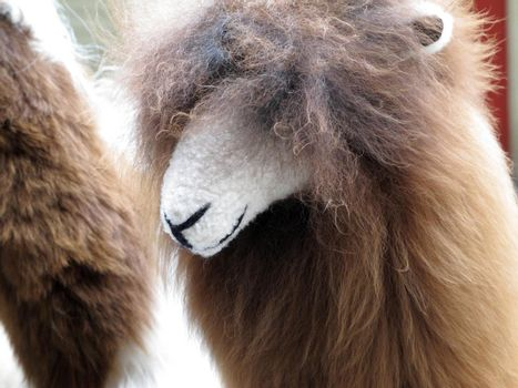 Close-up of llama, Sacred Valley, Machu Picchu