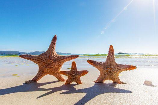 Three Starfish on sandy beach