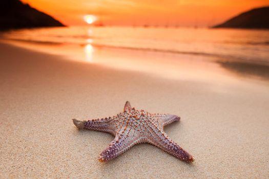 Starfish on beach at sunset