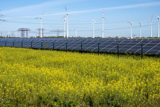 Flowering canola field with alternative energy production