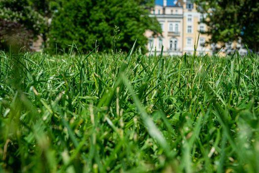 Grass Green Park Urban Europe Bulgaria Sunny Day