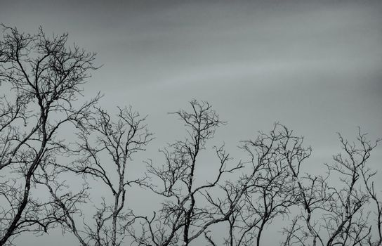 Bare tree on gray sky background. Silhouette dead tree. Background for dead, lonely, hopeless, and sad. Beauty pattern of tree branches. Fragility and uncertainty of life concept. Peaceful death.