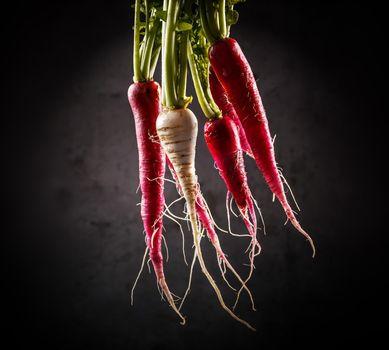 Fresh long radishes