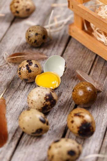 Quail eggs with feather