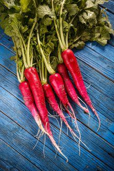 Bunch of fresh long radish