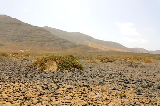 Pebbles shingles stones vegetations in desert with mountains of Lanzarote