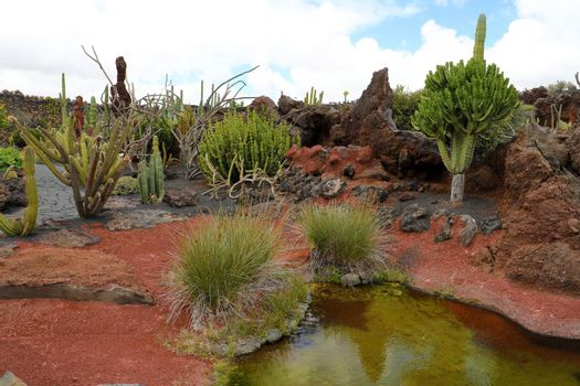 Daylight scene shot on Canary Islands, showing the huge cactus diversity in different forms, sizes and lengths, Guatiza, Lanzarote