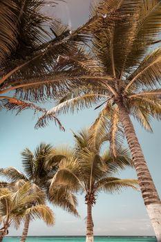 Ideal Caribbean Beach