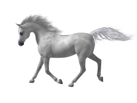 The Arabian or Arab is a distinctive breed of horse developed in the Arabian Peninsula with a fine featured face and high tail carriage.