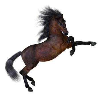 Bay is a common horse color on many different breeds with a deep reddish brown with black mane and tail.