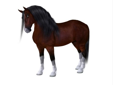 The Clydesdale is a distinctive breed of horse developed in Scotland as a heavy draft to do farm work.