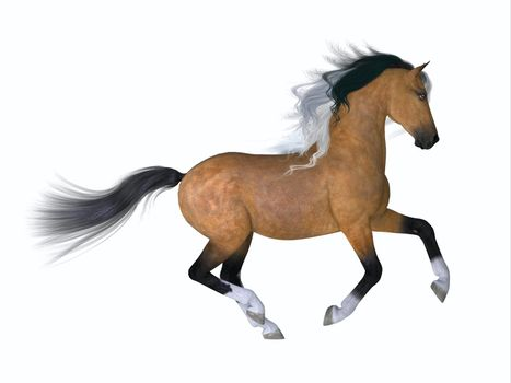 The Quarter horse is a distinctive breed developed in the America with the ability to sprint fast in the quarter mile.