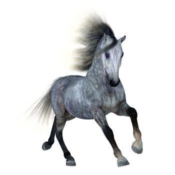 The Dapple Grey is a coat color of many different breeds of horses and is distinguished by a base black color.