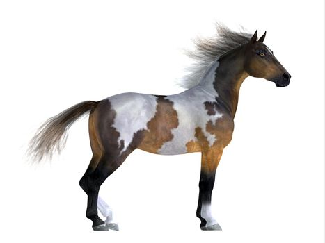 The Mustang is a wild free-roaming horse of the Western United States and can be various coat colors.
