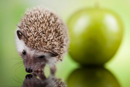 Autumnal animal, Hedgehog with apple