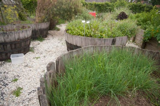 a garden with various growing plants and herbs in it