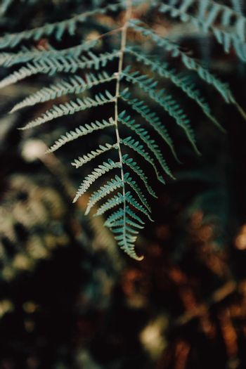 Minimalistic shot of fern in the forest