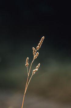 A single peak with a super blurry background