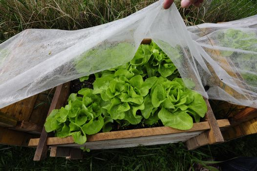 plastic greenhouse or foil greenhouse for food production in agriculture