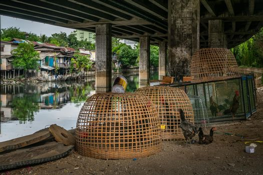 bangkok,Thailand - jun 30, 2019 : Raising chickens natural style for eggs and meat along the canal under Khlong Toei Expressway.