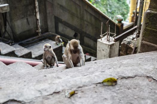 Monkeys on steps of stairs