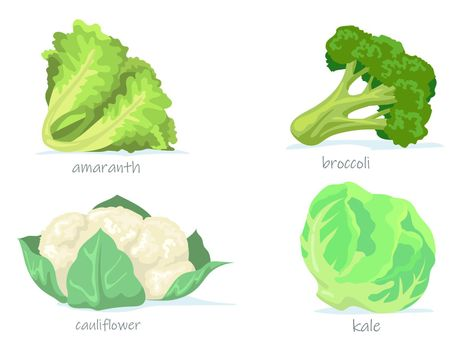 Variety of cabbage flat pictures collection