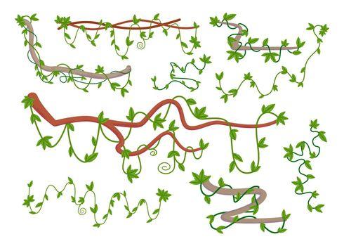 Cartoon set of wild curling liana twig vector illustration