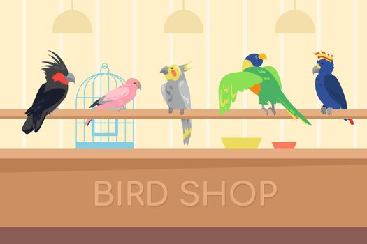 Collection of multicolored parrots in bird shop